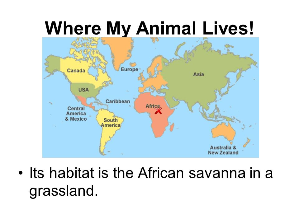 Where My Animal Lives! Its habitat is the African savanna in a grassland.