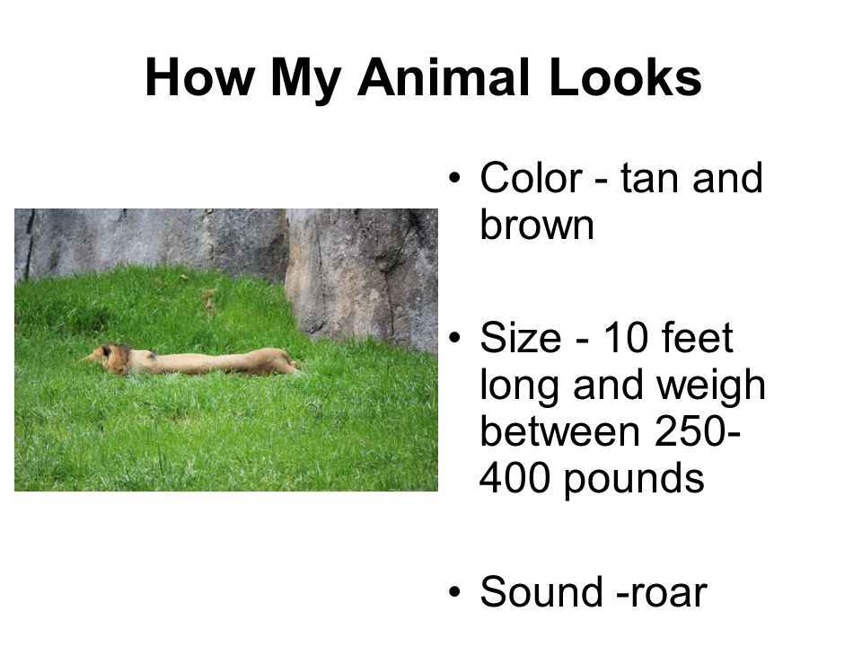 How My Animal Looks Color - tan and brown