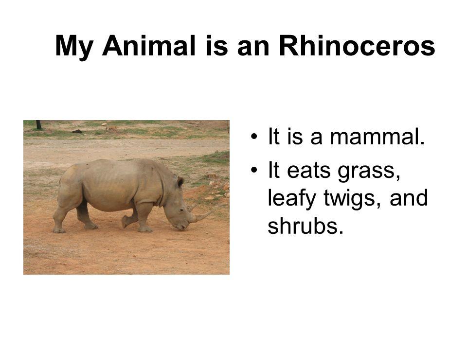 My Animal is an Rhinoceros