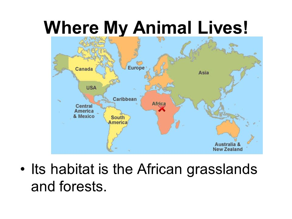 Where My Animal Lives! Its habitat is the African grasslands and forests.