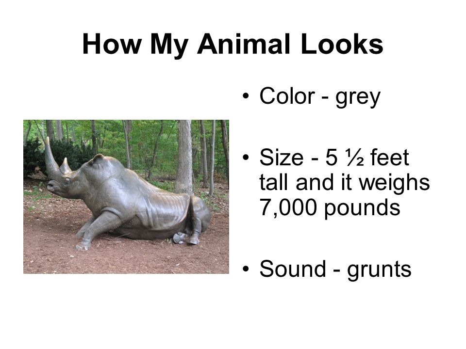 How My Animal Looks Color - grey