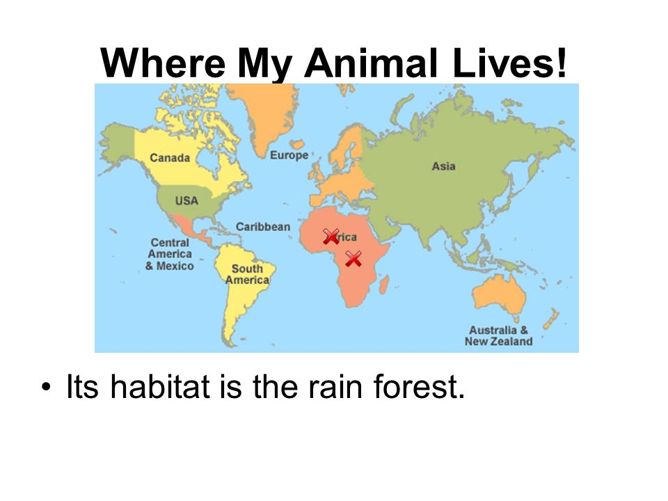 Where My Animal Lives! Its habitat is the rain forest.