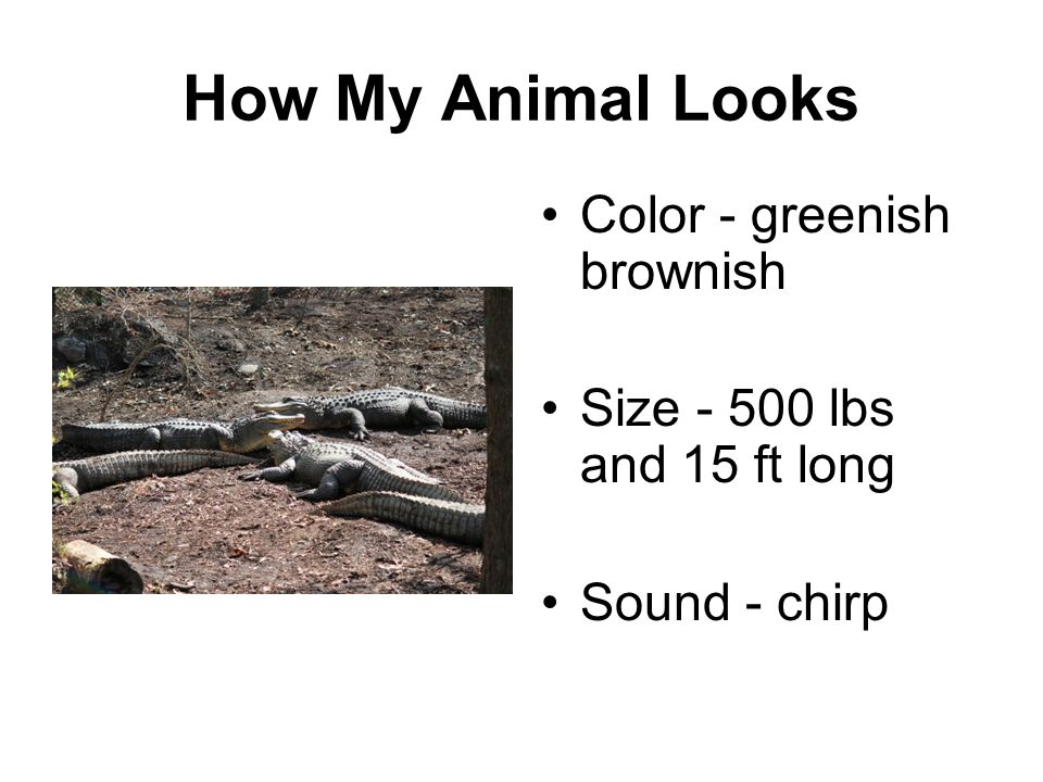 How My Animal Looks Color - greenish brownish