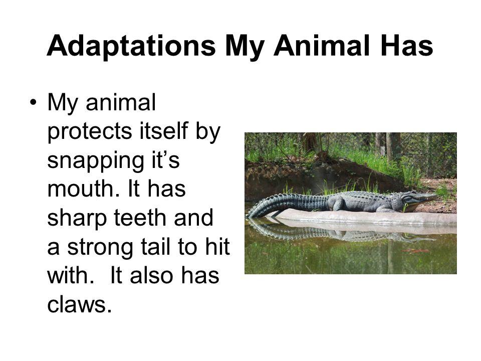 Adaptations My Animal Has