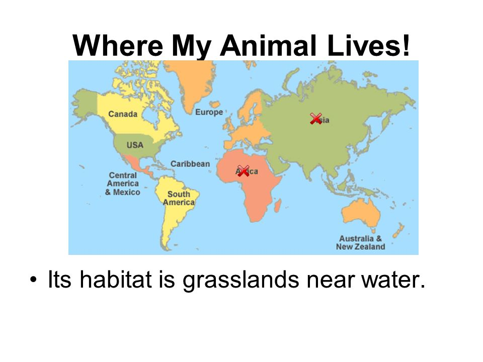 Where My Animal Lives! Its habitat is grasslands near water.