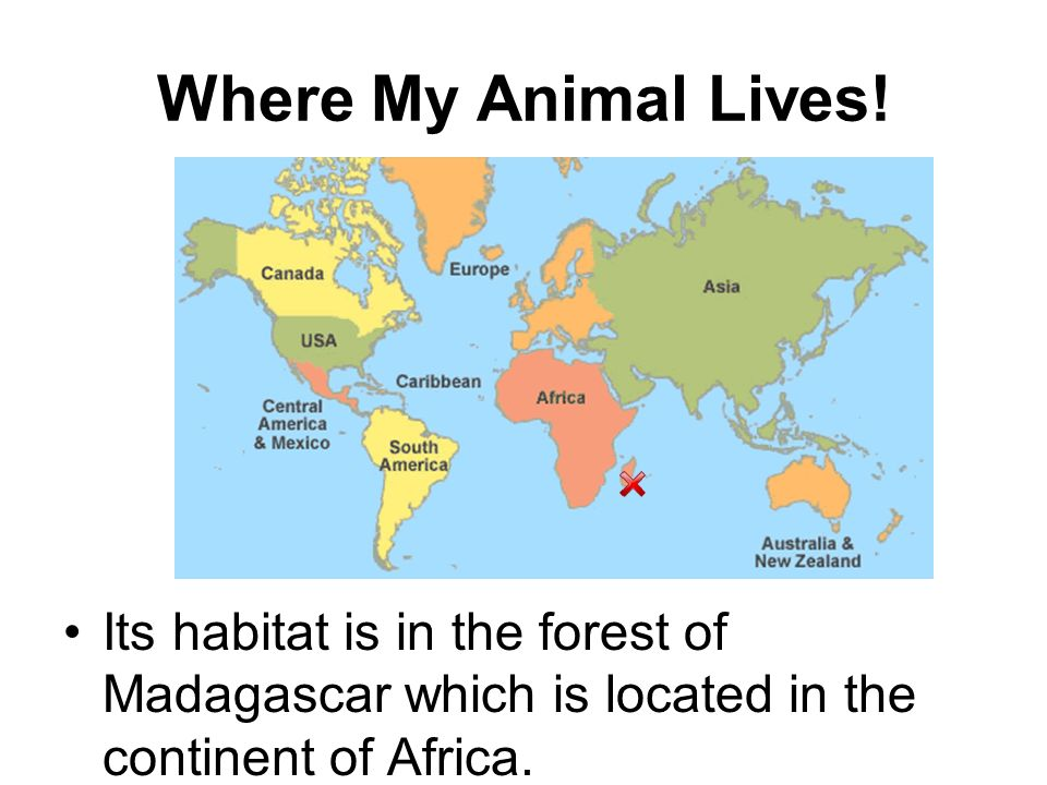 Where My Animal Lives.