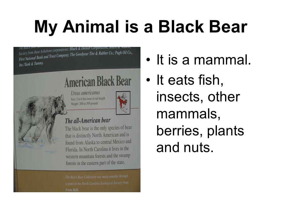 My Animal is a Black Bear