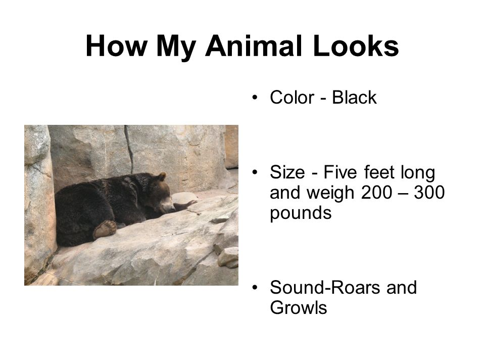 How My Animal Looks Color - Black