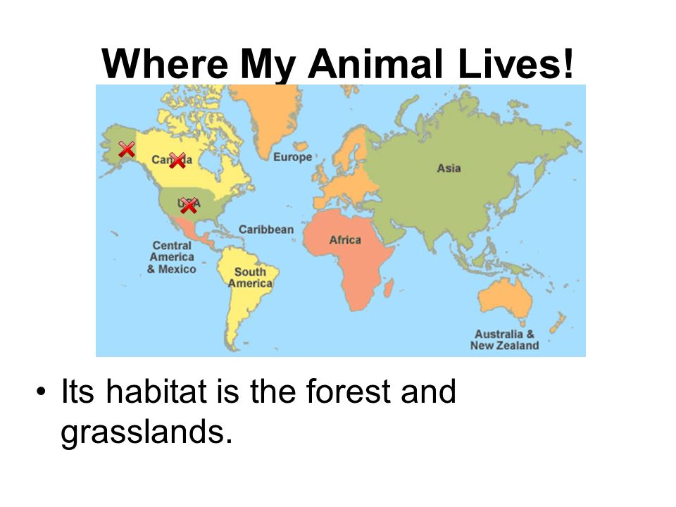 Where My Animal Lives! Its habitat is the forest and grasslands.