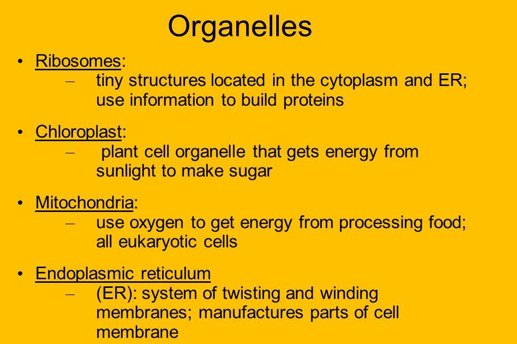 Organelles Ribosomes: