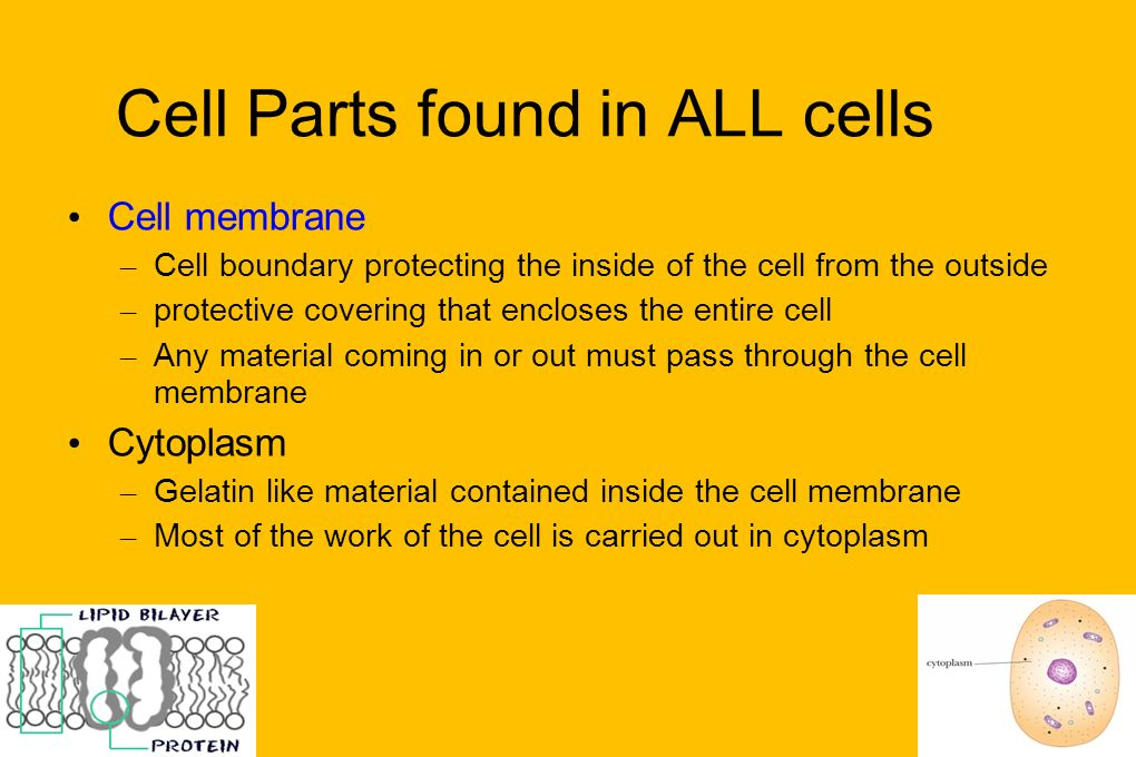 Cell Parts found in ALL cells