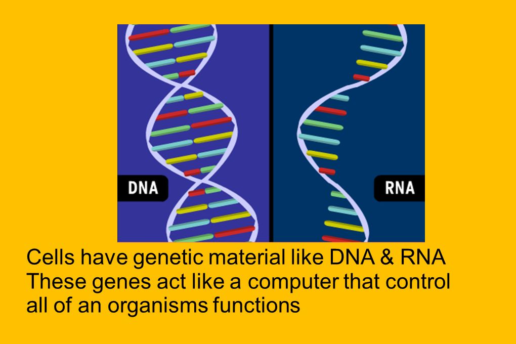 Cells have genetic material like DNA & RNA