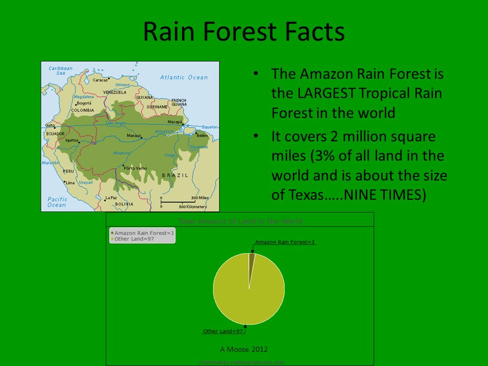 Rain Forest Facts The Amazon Rain Forest is the LARGEST Tropical Rain Forest in the world.
