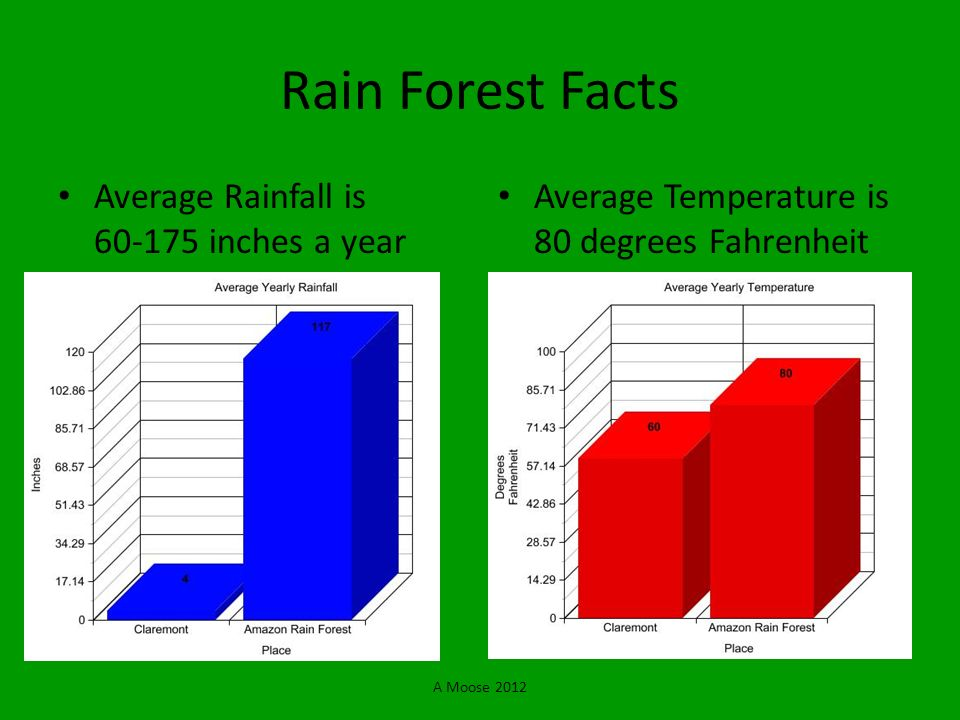 Rain Forest Facts Average Rainfall is 60-175 inches a year