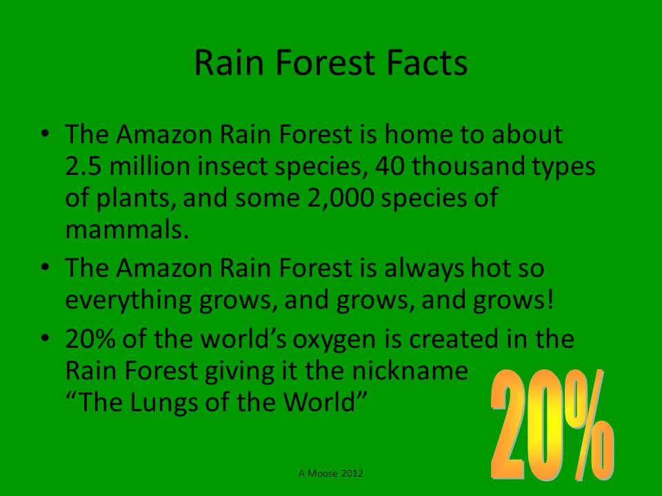 Rain Forest Facts The Amazon Rain Forest is home to about 2.5 million insect species, 40 thousand types of plants, and some 2,000 species of mammals.