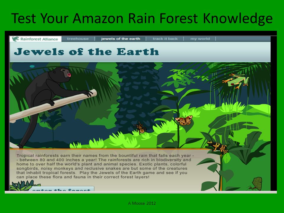 Test Your Amazon Rain Forest Knowledge
