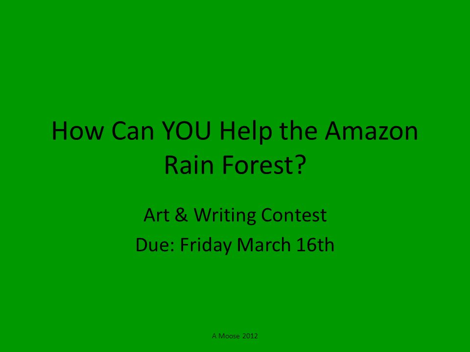 How Can YOU Help the Amazon Rain Forest