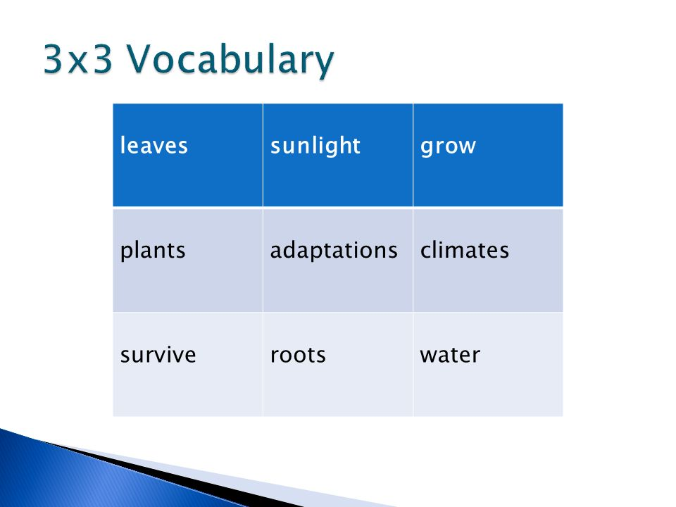 3x3 Vocabulary leaves sunlight grow plants adaptations climates