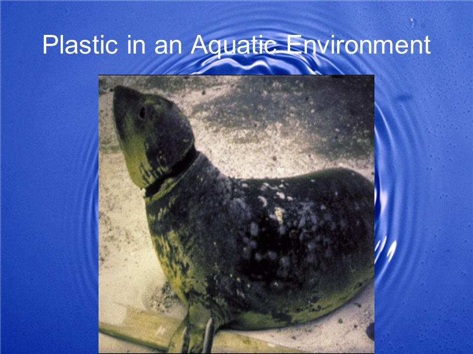 Plastic in an Aquatic Environment