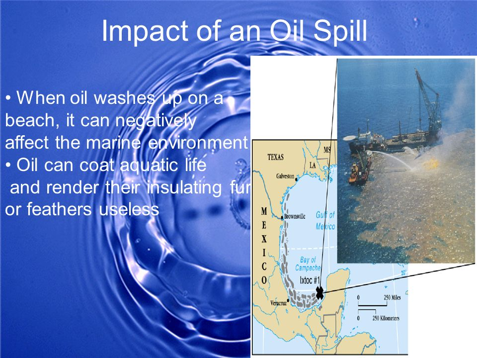 Impact of an Oil Spill • When oil washes up on a beach, it can negatively. affect the marine environment.