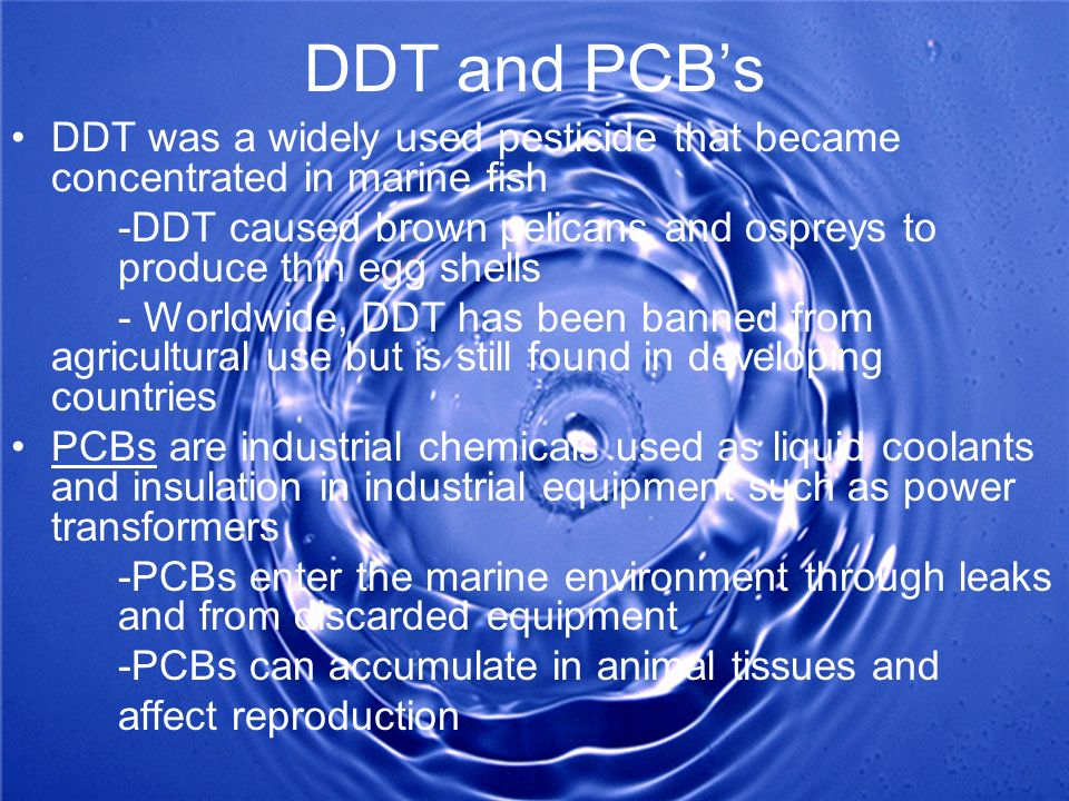 DDT and PCB's DDT was a widely used pesticide that became concentrated in marine fish.