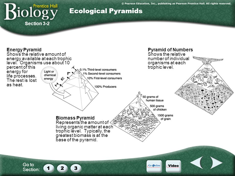 Ecological Pyramids Section 3-2 Energy Pyramid
