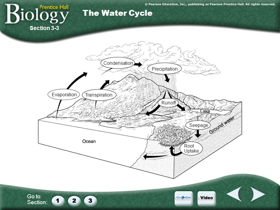 The Water Cycle Section 3-3 Condensation Precipitation Evaporation