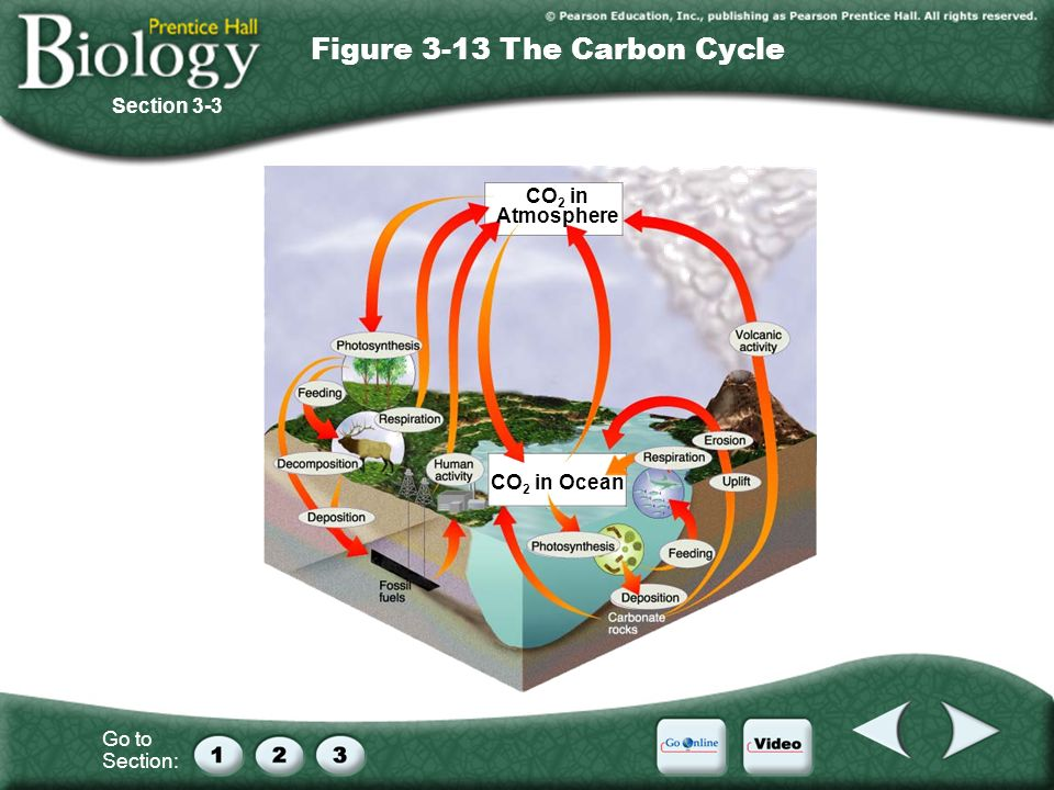 Figure 3-13 The Carbon Cycle