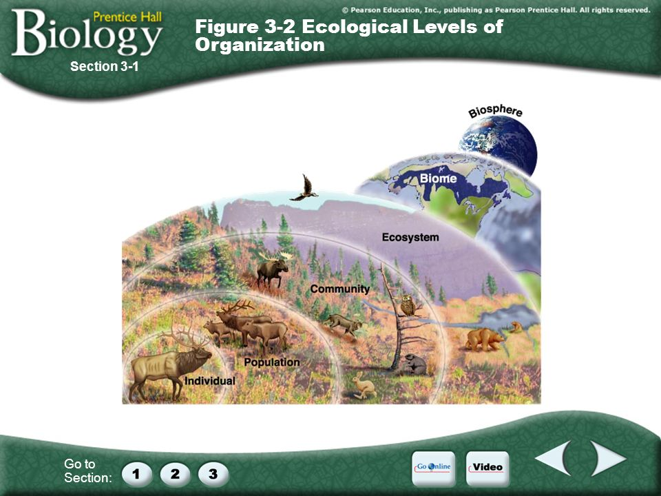 Figure 3-2 Ecological Levels of Organization