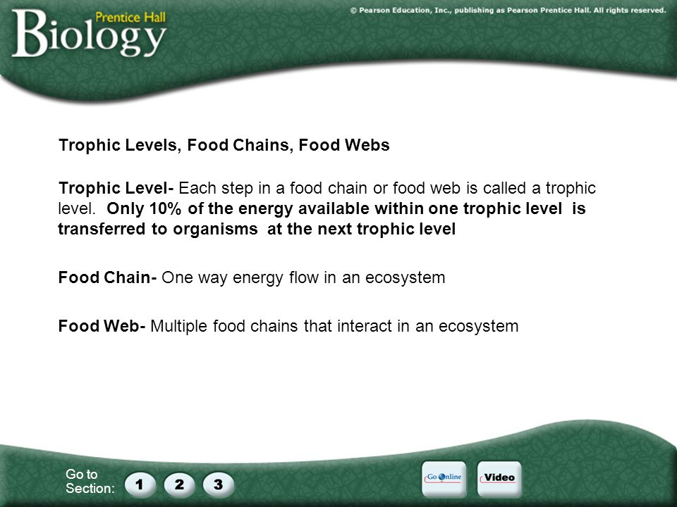 Trophic Levels, Food Chains, Food Webs