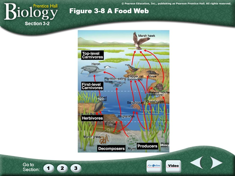 Figure 3-8 A Food Web Section 3-2