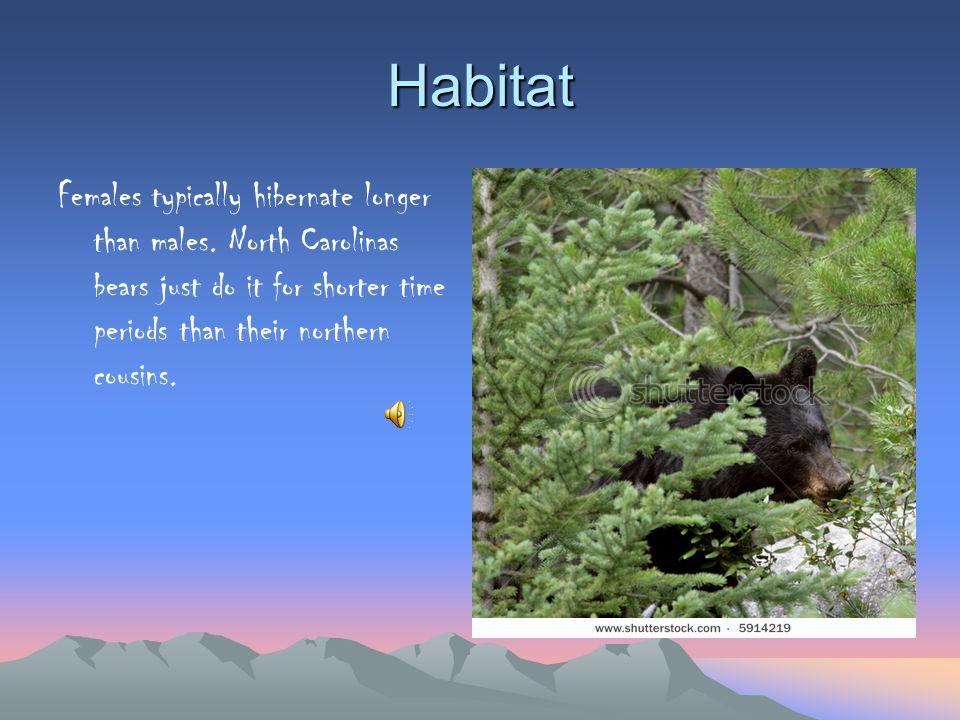 Habitat Females typically hibernate longer than males.