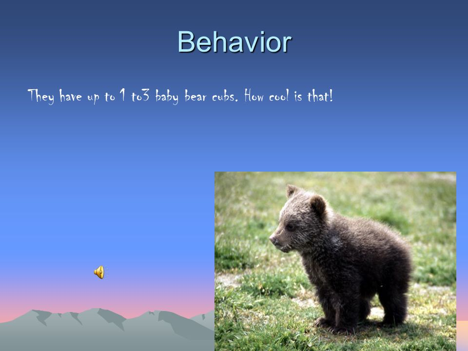 Behavior They have up to 1 to3 baby bear cubs. How cool is that!