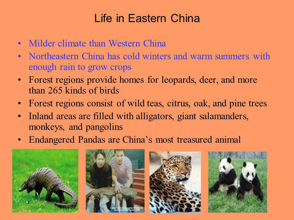 Life in Eastern China Milder climate than Western China