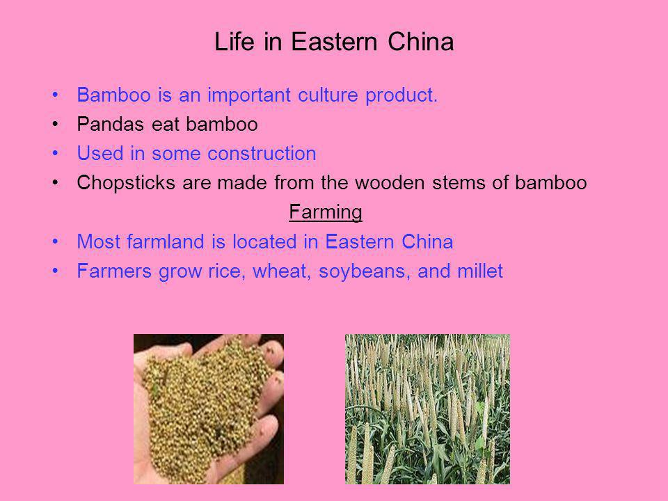 Life in Eastern China Bamboo is an important culture product.