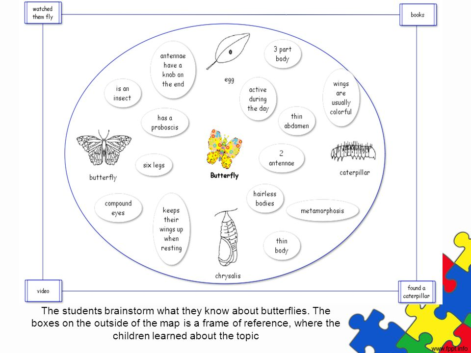 The students brainstorm what they know about butterflies