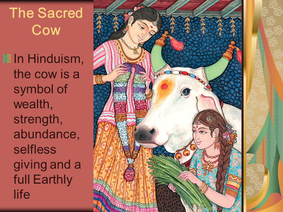 The Sacred Cow In Hinduism, the cow is a symbol of wealth, strength, abundance, selfless giving and a full Earthly life.