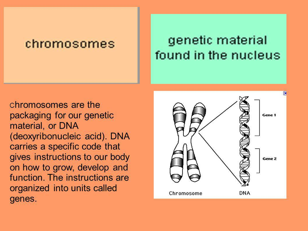 Chromosomes are the packaging for our genetic material, or DNA (deoxyribonucleic acid).