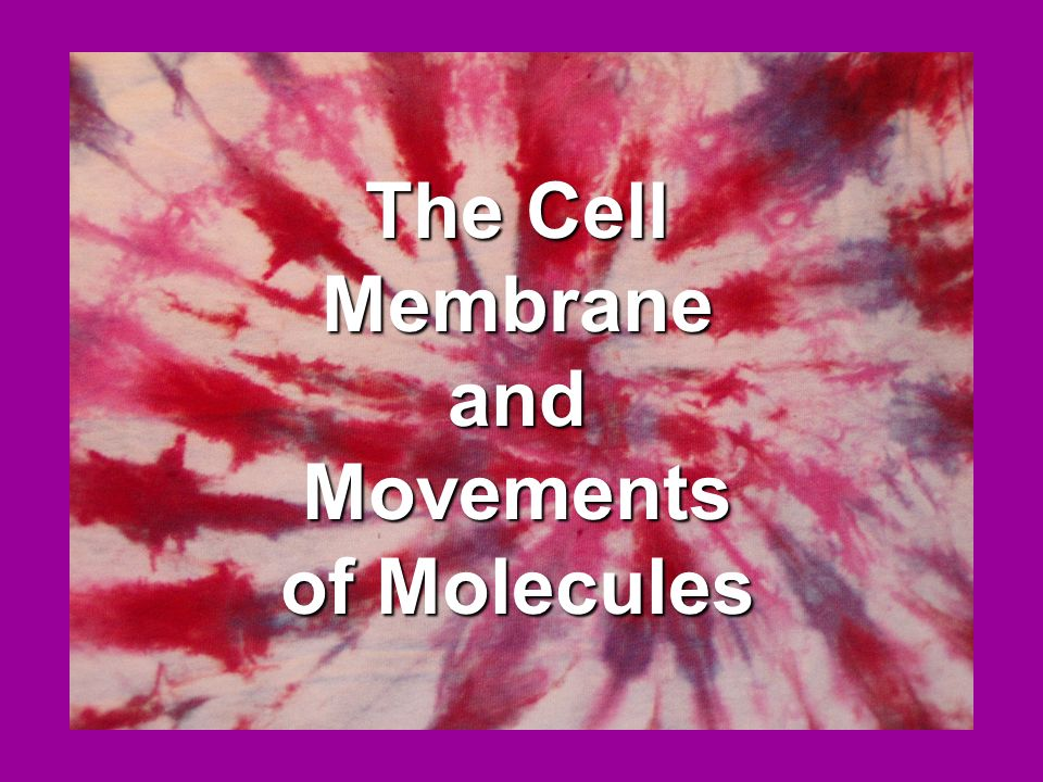 The Cell Membrane and Movements of Molecules