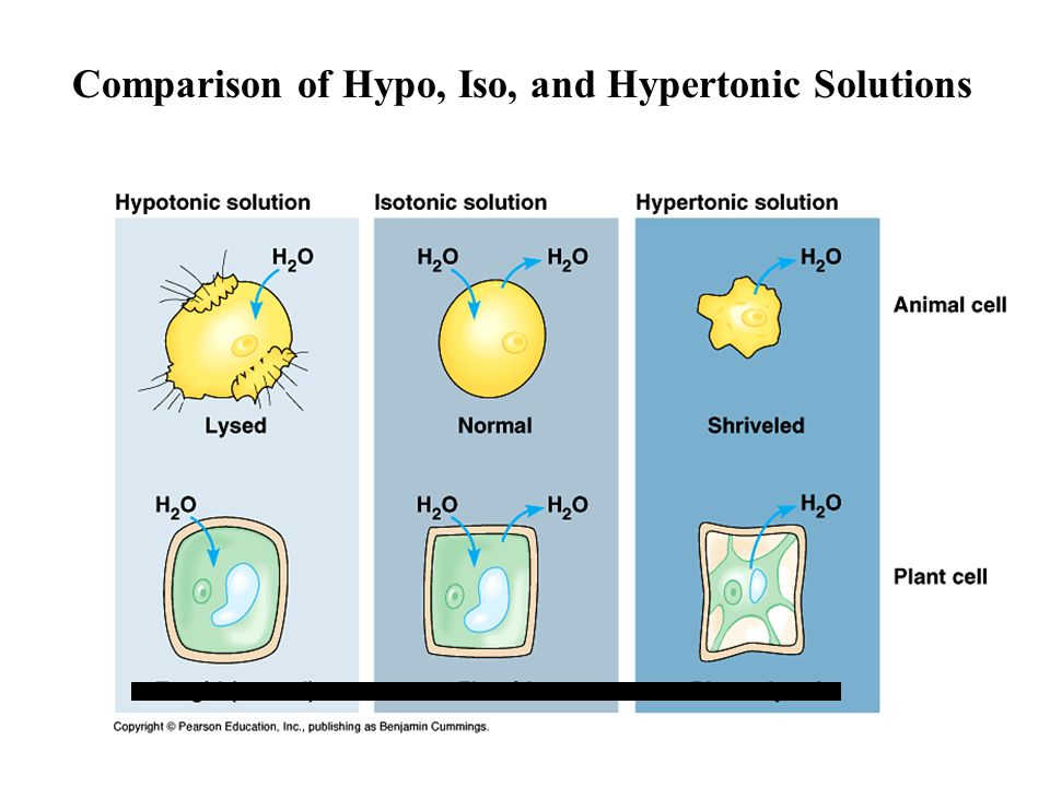 Comparison of Hypo, Iso, and Hypertonic Solutions