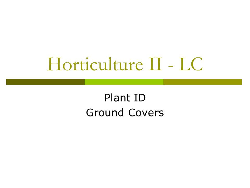 Horticulture II - LC Plant ID Ground Covers