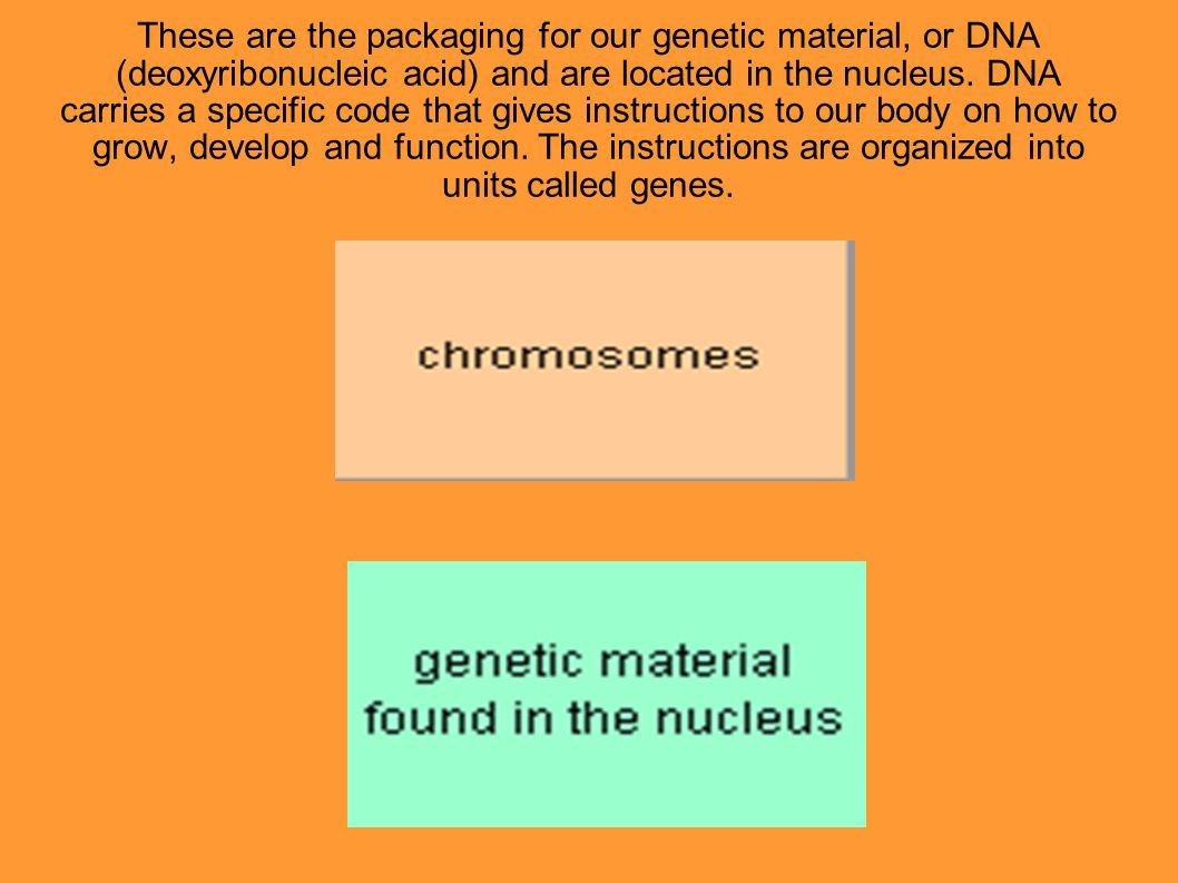 These are the packaging for our genetic material, or DNA (deoxyribonucleic acid) and are located in the nucleus.