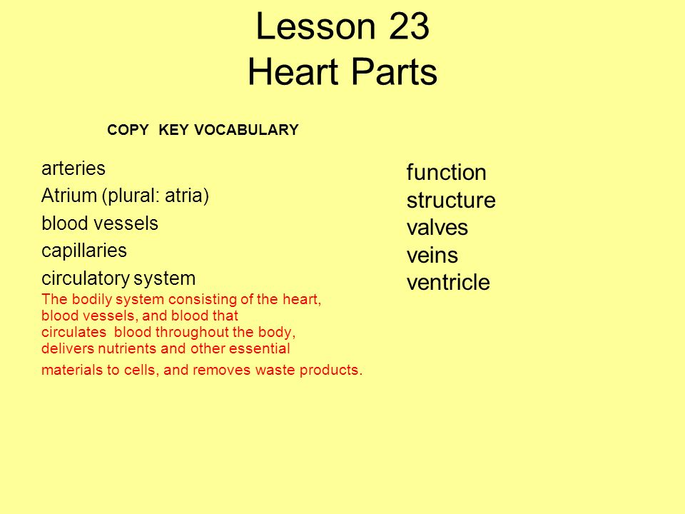 Lesson 23 Heart Parts function structure valves veins ventricle