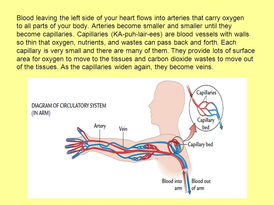 Blood leaving the left side of your heart flows into arteries that carry oxygen