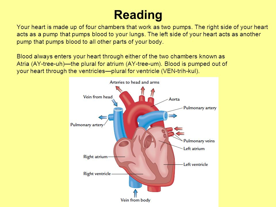 Reading Your heart is made up of four chambers that work as two pumps. The right side of your heart.