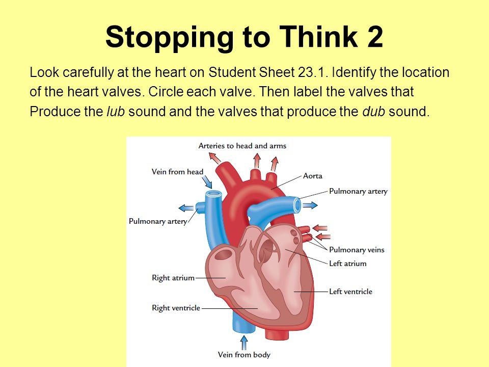 Stopping to Think 2 Look carefully at the heart on Student Sheet 23.1. Identify the location.