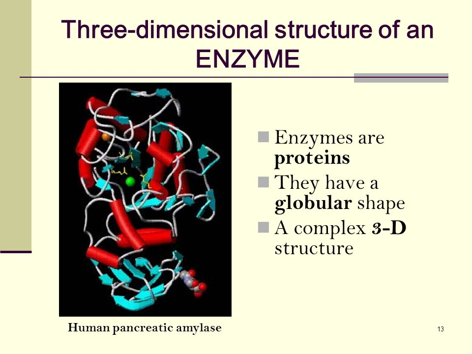three dimensional structure of proteins The final protein structure is dependent upon the amino acids that compose it protein function is directly related to the structure of that protein a protein's specific shape determines its function if the three-dimensional structure of the protein is altered because of a change in the structure of the amino acids, the protein.
