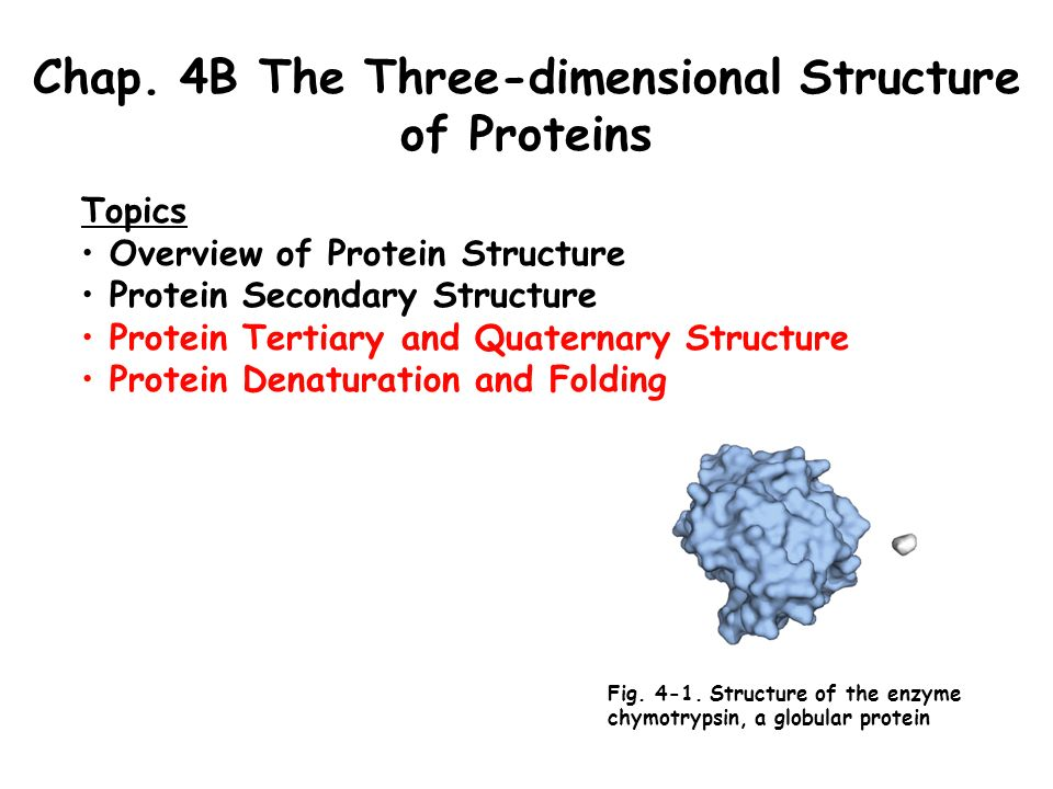 three dimensional structure of proteins Chapter 4: multiple choice questions which type of bonding is responsible for the secondary structure of proteins a) a discrete region of polypeptide chain that has folded into a self-contained three-dimensional structure c.