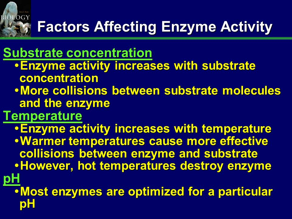 factors influencing enzyme activity Several factors affect the rate of an enzyme catalyzed reaction among these are enzyme concentration, substrate concentration, temperature and ph besides, some.