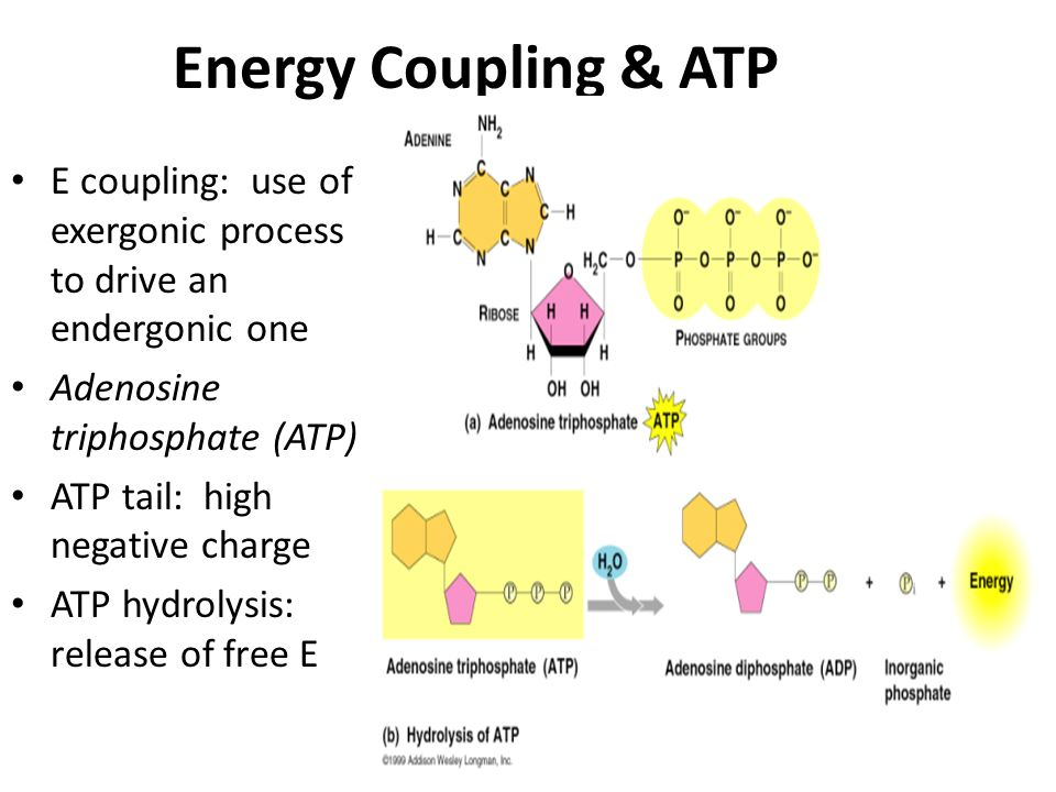 How Does Atp And Release Energy Ace Energy